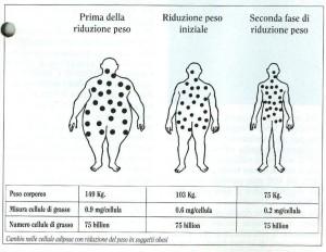 celule adipose