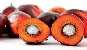 olio-di-palma-pag.51